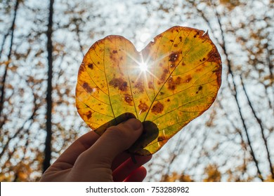 Hand Holding Autumn Leaf in Shape of Heart and Sunrays Going Through