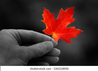 Hand holding autumn red maple leaf foliage fall colors pattern