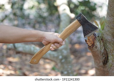 Hand holding an axe to cut branch of tree. Manual tool for carpenter and lumberjack, woodcutter.
