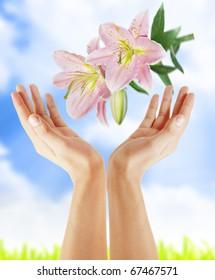 Hand holding beautiful flower