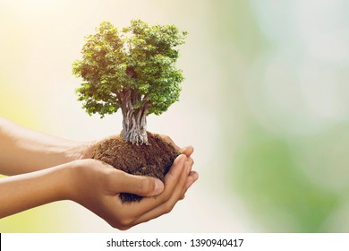 hand holding big tree growing on green background