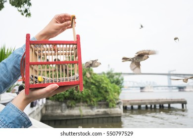 Hand holding a bird cage for liberation to freedom.