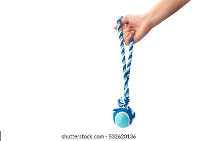 Hand holding a blue color dog rope. isolated on white background with clipping path and copy space