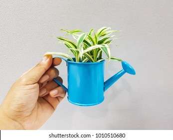 A hand is holding a blue pot of little plant. Background behide is gray tone.