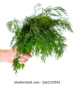 Hand holding bunch of fresh dill isolated on white