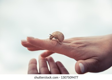 Hand holding carefully sea turtle in turtle farm nursery concept help care way forward