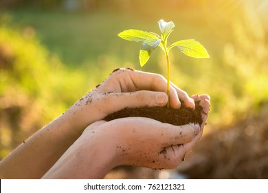 Hand holding and caring a green plant over lighting background , Planting tree , Environment , Plant in soil on nature background. Ecology concept.