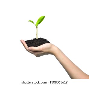 Hand holding and caring a green young plant isolated on white background