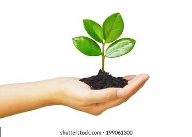 hand holding and caring a young green plant / planting tree / growing a tree / love nature / save the world