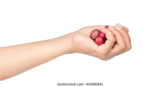 hand holding Carissa carandas Linn,Karanda, Carunda isolated on white background
