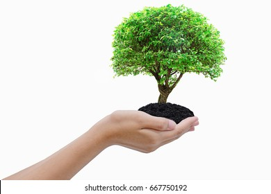 hand holding and carrying a young green plant with isolate white background / love nature / save the world
