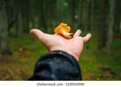 Hand holding a chanterelle mushroom