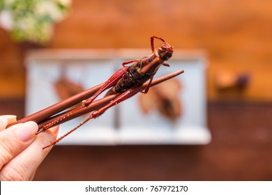 Hand holding chopsticks with grasshopper fried insect. Insect food is the healthy meal high protein diet concept. Closeup