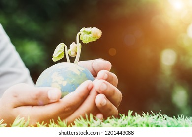Hand holding clay globe model with seeding plant for save world in sunny day on green grass, Green World Environment ecology day, Life on earth concept, flare light and vintage tone
