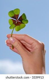hand is holding a clover