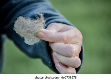 Hand Holding Clump of Wool Material