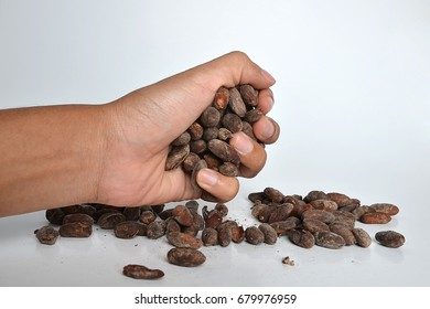 hand holding cocoa beans isolated on white background.