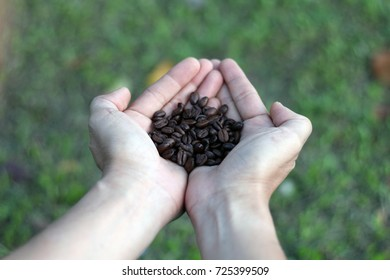 Hand Holding coffee bean over blur background