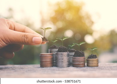 Hand holding coin and green plant on old wood tree bokeh background.concept save money