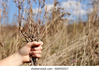 Hand Holding Fistful Of Golden Grass With Seeds Attached With Plants And Blue Sky In Background On A Farm In The Mountains Of South West Virginia