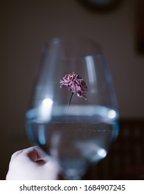 Hand is holding a flower behind wineglass with water. Pure and clear high quality photo for decoration