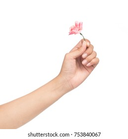 Hand holding flower isolated on white background