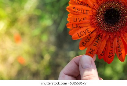 Hand holding a flower with motivation words