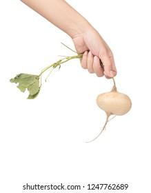 hand holding fresh of jicama isolated on white background