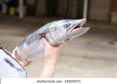 hand holding a fresh king mackerel fish on blur background