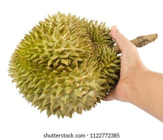 Hand Holding Fresh Ripe Durian Isolated on White Background. One of The Most Popular Fruits in The World and King of Fruits in Thailand.