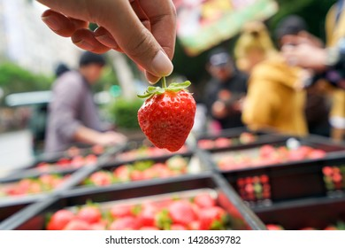 Hand holding fresh strawberries in market