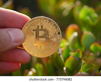 Hand holding golden bitcoin BTC coin in sunny garden outdoors, macro closeup. Blockchain investment concept.