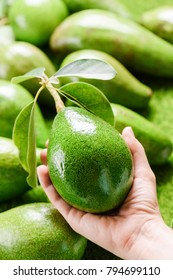 Hand holding green avocado at market. Woman choosing fresh ripe fruits at grocery store. Healthy eco food. Product of organic farming. Shopping concept.