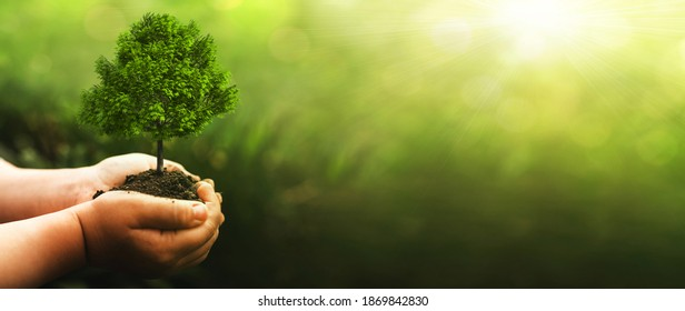 Hand holding green big tree growing on sunny green nature background.  Environment world earth day. Eco  concept. Arbor day