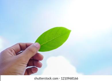 Hand holding green clover leaf on white blue sky background.