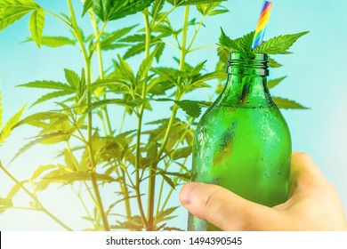 Hand holding Green glass bottle with Cannabis CBD infused Water lemonade against Cannabis plant