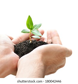 Hand holding green seedling with soil