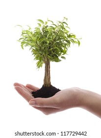 Hand holding green tree isolated on white
