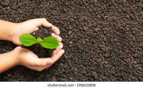 Hand holding Green young tree plant sprout growing out from the soil, environment earth day concept, copy space