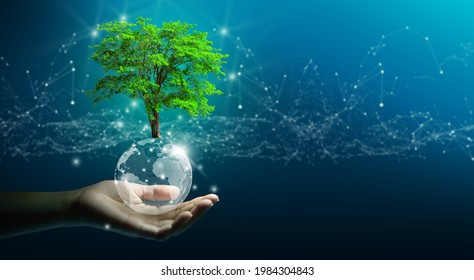 Hand holding growing tree on crystal ball with technological convergence blue background. Innovative technology, Nature technology interaction, Environmental friendly, IT Ethics, and Ecosystem concept