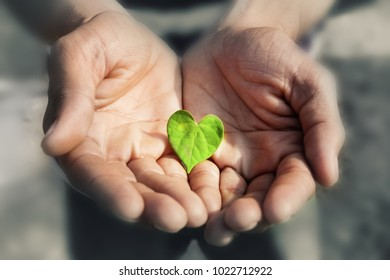 Hand holding Heart Shape Green Leaf,  Earth day concept