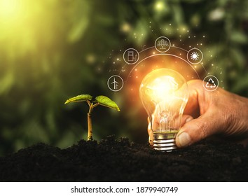 Hand holding illuminated light bulb against nature. Ecology concept. Energy sources for renewable, sustainable development.