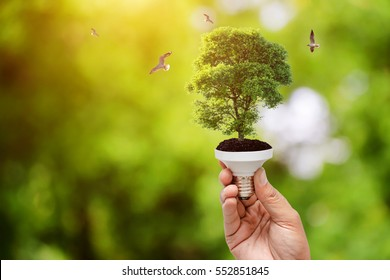 Hand holding light bulb on tree green Natural background , green energy concept