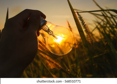 hand holding a light bulb with sunset soil power concept