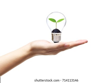 Hand holding a light bulb with a young green plant growing inside  Green energy for sustainable living concept