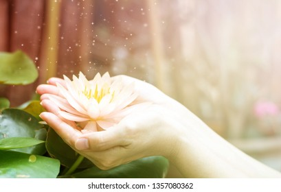 Hand holding lotus or water lily for Vesak day, Buddhist lent day, Buddha's birthday, Buddha Purnima worshiping, and world human spirit.