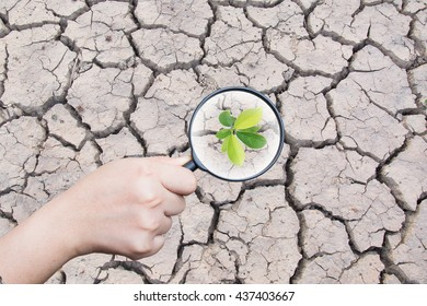 hand holding magnifying find plant tree on dry crack