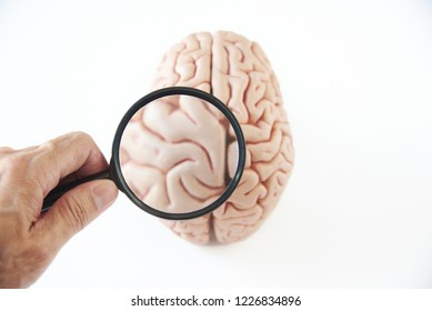 Hand holding magnifying glass investigating human brain model