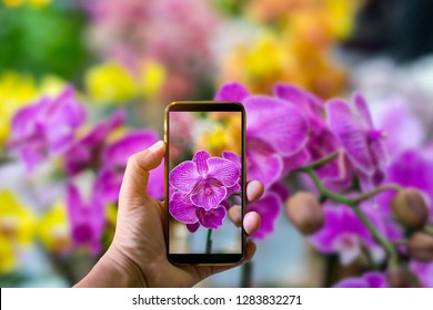 Hand holding mobile phone and take a photo colorful orchid flowers on blurred background with sunlight.