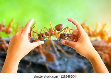 Hand holding mobile phone and take a photo Natural ant on blurred background with sunlight.